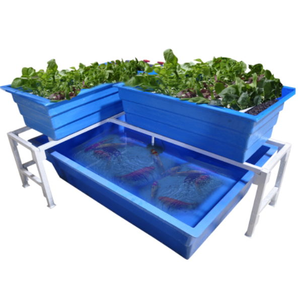 urban farming akuaponik