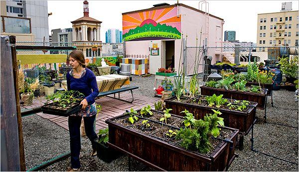 urban farming pot