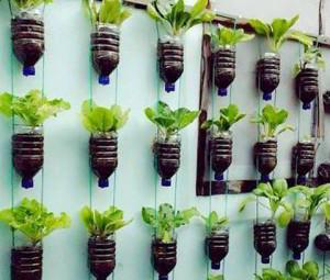 urban farming vertikultur