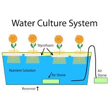 Ilustrasi Water Culture System Hidroponik
